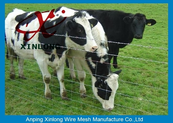 Cina High Securety Galvanized Field Fence For Cattle / Horse / Sheep Good Flexibility pemasok